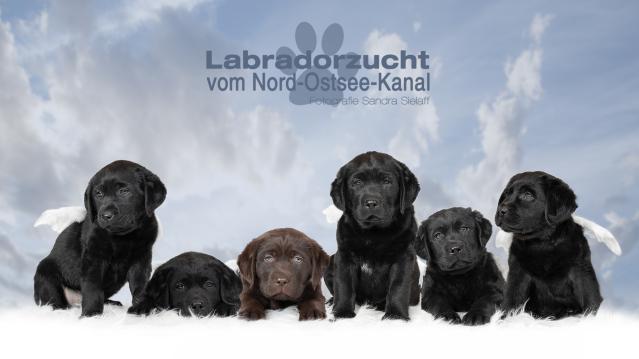 Von links nach rechts: Mali, Frieda, Nala, Joey, Fiete, Lucy