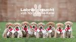 Labradorzuch vom Nord-Ostsee-Kanal, Quaint Edition