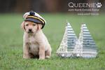 Quaint Edition, Labradorzucht Nord-Ostsee-Kanal, Queenie
